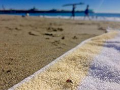 Santa Cruz CA: We were already feeling pretty lucky hanging at the beach today but then we got confirmation from this little critter.  #santacruzlife #santacruz by yoursantacruz