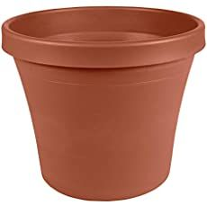 Rosemary Plant: How To Care For The Herb Rosemary Clay Flower Pots, Flower Pot Crafts, Painted Flower Pots, Clay Pot Crafts, Diy Clay, Clay Pots, Garden Planters, Planter Pots, Planter Ideas