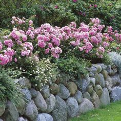Rose hedge & Rosenhecke Friesenwall plants) moreGreat list of perennial ground cover plants that love the shade! Farmhouse Landscaping, Landscaping Plants, Outdoor Landscaping, Most Beautiful Gardens, Amazing Gardens, Ground Cover Plants, Small Garden Design, Plantar, Begonia