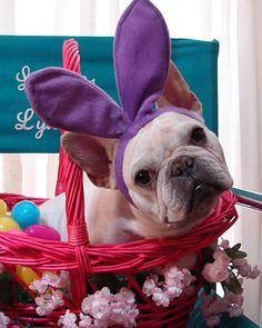"""Can we do Easter again? 