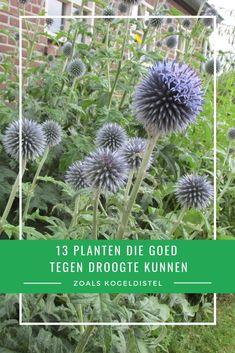 Verbena, Green Life, Garden Planning, Garden Inspiration, Garden Plants, Flower Power, Greenery, Eco Friendly, Pergola