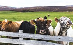 The FDA Is Adding Big New Restrictions On Livestock Antibiotic Use | Care2 Causes