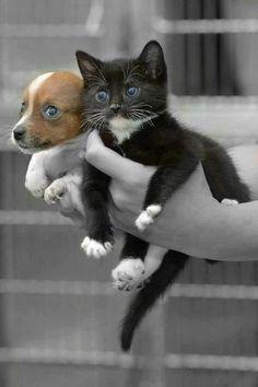 OMG, SO Much Cute!