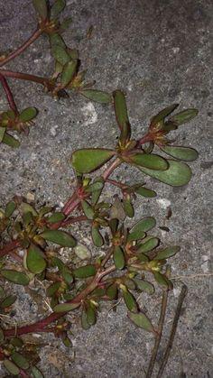 Kraut, Places To Visit, Lavender, Herbs, Healthy, Plants, Gardening, Medicine
