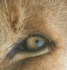 Fotografie: Z oka do oka - Kategorie: zvířata - PhotoPost. Pictures