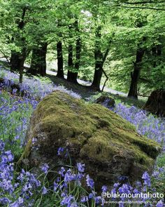 Bluebells in the Brecon Beacons National Park Sculpture Projects, Garden Sculpture, Brecon Beacons, Irish Sea, Traditional Landscape, Cymru, South Wales, Great Britain, Countryside