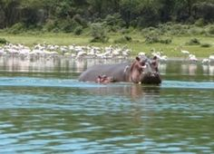Our collection of affordable Kenya safaris packages are popular. We offer variety of Kenya only customized safari or Kenya and Tanzania combined safaris. Tanzania Safari, African Safari, East Africa, Bird Watching, Kenya, Scenery, Tours, Animals, Animales
