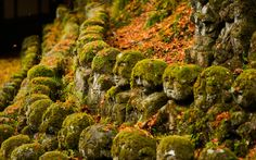 rock with moss - Google Search