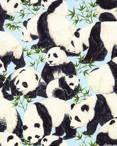 Giant Pandas - Quilt Fabrics from www.eQuilter.com                                                                                                                                                     More
