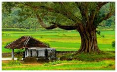 From the East to the West and from the North to the South, there are tourists hot spots that visitors cannot afford to miss, Among them, Kerala is an important tourist destination.
