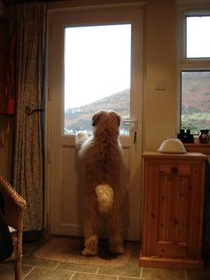 soft coated wheaten terrier ; only breed cute coming or going! ...........click here to find out more     http://googydog.com