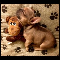 Loki & Mr.Monkey, French Bulldog Puppy❤ Follow our friends: @roninandloki and @brandonthetruthvera