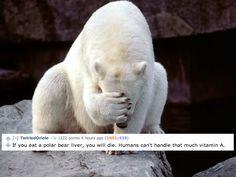 polar bear liver