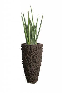 Planters for life Vase Lava Black - Sansevieria Cylindrica