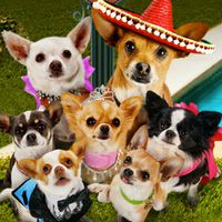 Beverly Hills Chihuahua 1, 2 and 3 movie night for dog week