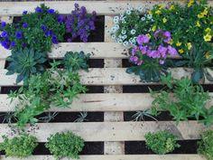 Jardí vertical amb pelet, plantes perennes i anuals. Reciclatge.