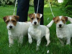 Ummmm....yes.  I will take all three, please.    :-)