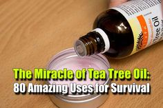 The Miracle of Tea Tree Oil: 80 Amazing Uses for Survival - SHTF, Emergency Preparedness, Survival Prepping, Homesteading Survival Food, Survival Prepping, Emergency Preparedness, Survival Skills, Wilderness Survival, Survival Hacks, Survival Quotes, Survival Stuff, Survival Shelter