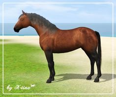 Barb horse by X-tina - Sims 3 Downloads CC Caboodle  Check more at http://customcontentcaboodle.com/barb-horse-by-x-tina/