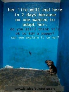 "PLEASE! Don't buy a new puppy or kitten from a ""breeder"" There are millions of wonderful, loving dogs and cats at shelters everywhere who desperately need a home!"