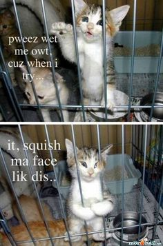 These cat pictures crack me up!