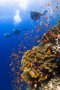 Diving... in Red Sea, Egypt...