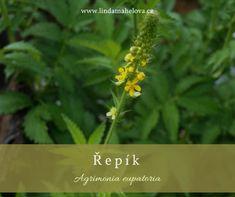 "Linda Mahelová | Bylinky, ""Provoněný den"" Herbs, Plants, Den, Herb, Plant, Planets, Medicinal Plants"
