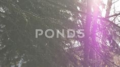 4k Close Up Tree Branches Falling Snow With Purple Lens Flare To Side Of Frame - Stock Footage | by RyanJonesFilms