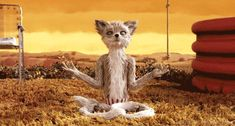New party member! Tags: yoga peace wes anderson zen foxes fantastic mr fox moment of zen