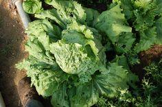 Per què hem de consumir verdures de varietats locals i de producció ecològica?