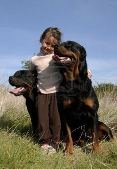 little girl and two dangerous purebred rottweiler