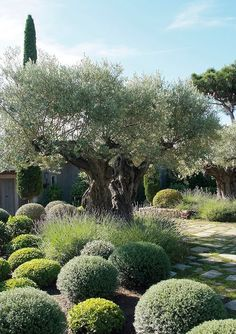 eye-catching-mediterranean-garden-decor-ideas-6