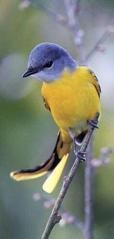 What beautiful colors Most Beautiful Birds, Pretty Birds, Animals Beautiful, Birds 2, World Birds, Love Birds, Cute Little Animals, Little Birds, Colorful Birds