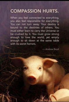 Compassion hurts so must avoid compassion fatigue. Vegan Facts, Vegan Memes, Vegan Quotes, Vegetarian Quotes, Reasons To Be Vegan, Compassion Fatigue, Stop Animal Cruelty, Vegan Animals, Animal Quotes