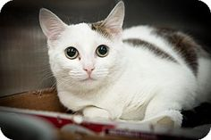 Frances is a kitten up for adoption at the Humane Society of New York.