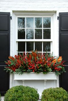 Christmas window boxes with magnolia, berries and greens. Shutter accents. Love.