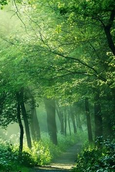 "Magical forest. ~~""In the right light, at the right time, everything is extraordinary."" ~ Aaron Rose ~~"