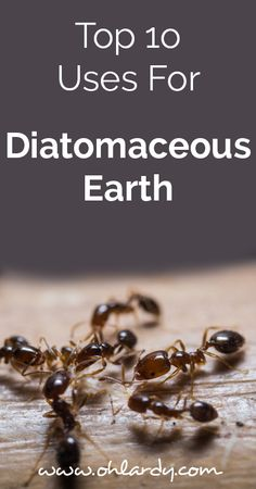 Even for a dedicated diatomaceous earth user like myself Im always learning new ways to use DE. Read our top ten ways to incorporate diatomaceous earth m Plant Pests, Garden Pests, How To Make Homemade, Laundry Detergent, Pest Control, Natural Living, Real Food Recipes, Health Recipes, Food Tips