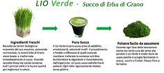 Puro succo di erba di grano privo di veicolanti od addensanti ,Biologico, senza glutine, ricco di principi attivi, e con un alto contenuto di clorofilla approfondimenti su www.lioverde.com/