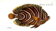 Vintage Printable: October (2 of 5) – Animals, Sea creatures