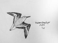 Drieteenstrandloper, fineliner, vogel, bird, illustration