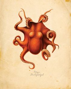 Vintage Octopus print - I need this! Seriously. I must find a copy of this to frame. I am officially obsessed.