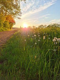 """10 jaar geleden leerde ik van iemand een hele belangrijke les die mij voor altijd bij blijft. Ik schreef een soort korte """"brief"""" aan hem. Om te vertellen dat het soms wel vorige week lijkt, hij nog steeds gemist wordt en ik hem wil bedanken voor die ene wijze les. Vorige week kwam je weer… Het bericht Een brief aan iemand die ik niet snel vergeet verscheen eerst op Bij Zus. Country Roads, Celestial, Sunset, Outdoor, Blogging, Outdoors, Sunsets, Outdoor Games, The Great Outdoors"""