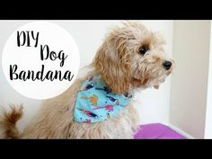 How to make a dog bandana? Dog scarf tutorial - Sew Crafty by AGF - YouTube #doggroomingdiy Super Cute Dogs, Puppy Bandana, Diy Dog Collar, Diy Dog Toys, Dog Bows, Diy Stuffed Animals, Dog Grooming, Grooming Salon, Puppies