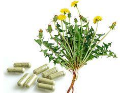 Cactus Plants, Herbs, Cacti, Cactus, Herb, Medicinal Plants