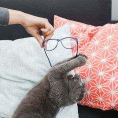 Chat mangeant lunettes Edie & Watson #glasses #cat #cute