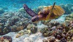 Los arrecifes de coral: una maravilla en peligro. http://mascarondeproa.wixsite.com/mascaron/medioambiente