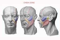 Credits to Anatomy for Sculptors Character Design, Sketch Book, Face Drawing Reference, Anatomy Sculpture, Anatomy For Artists, Drawing Reference Poses, Anatomy Sketches, Face Drawing, Planes Of The Face