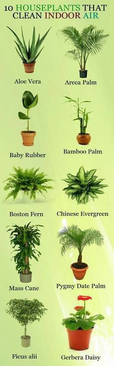 Plants: clean indoor air