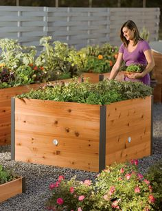 4' x 4' Elevated Cedar Raised Bed I have their 2' x 2' and 2' x 8' beds and love them! I'm getting the 4' x 4' for next year. Perfect for square foot gardening!